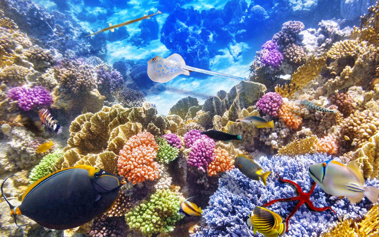 характер фотографии подводного мира высокого качества соединение